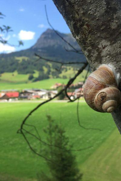 Natur-Schnecke-Job-Gesundheits-Krankenpfleger-Altenpfleger-Bayern